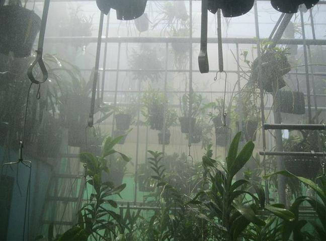 Hệ thống phun sương tưới lan có hiệu quả không?