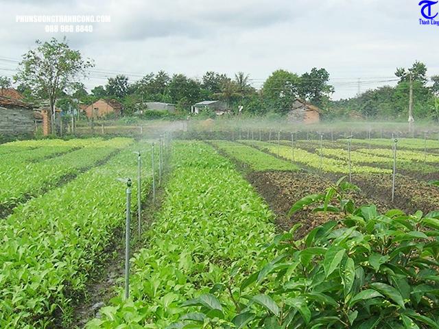 cách lắp đặt hệ thống tưới phun mưa hiệu quả