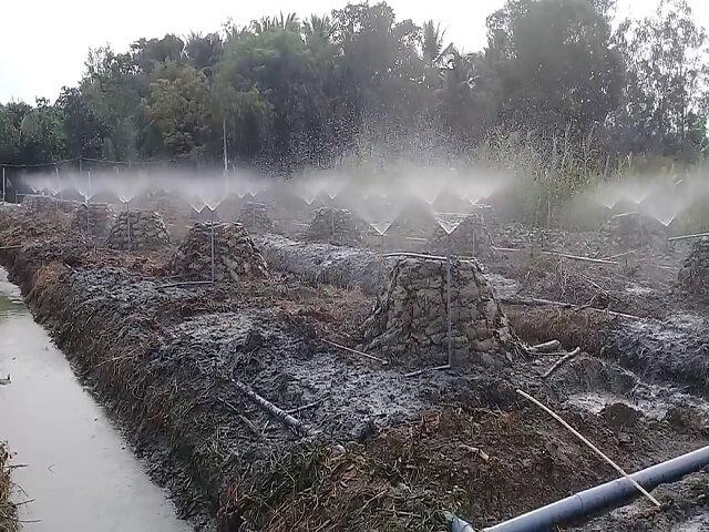 Hệ thống tưới nhỏ giọt cho cây sầu riêng