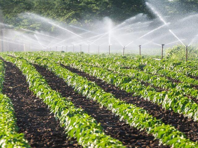 hệ thống tưới phun mưa cho vườn rau