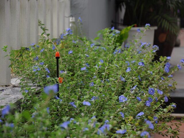 hệ thống tưới tự động cho hoa màu