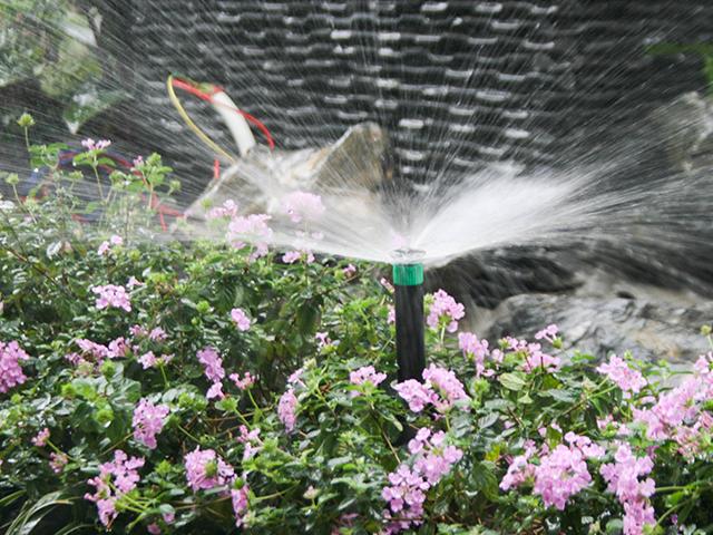 tưới phun sương cho hoa lan